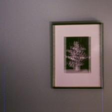 6-framedflower_1